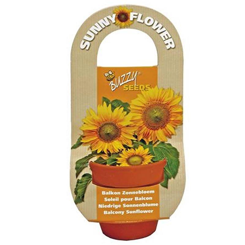Buzzy Flowering Gift Grow Kit Sunny Flower Growland