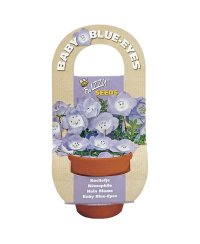Buzzy® Flowering Gift Grow Kit- Baby Blue-Eyes