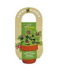 Buzzy® Flowering Gift Grow Kit - Lucky Clover