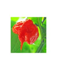 Carolina Reaper Chili Seeds