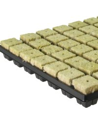Grodan Rockwool Tray Large Cubes  (77 pcs)